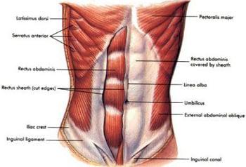 Art]Trening mięśni brzucha - Forum SFD